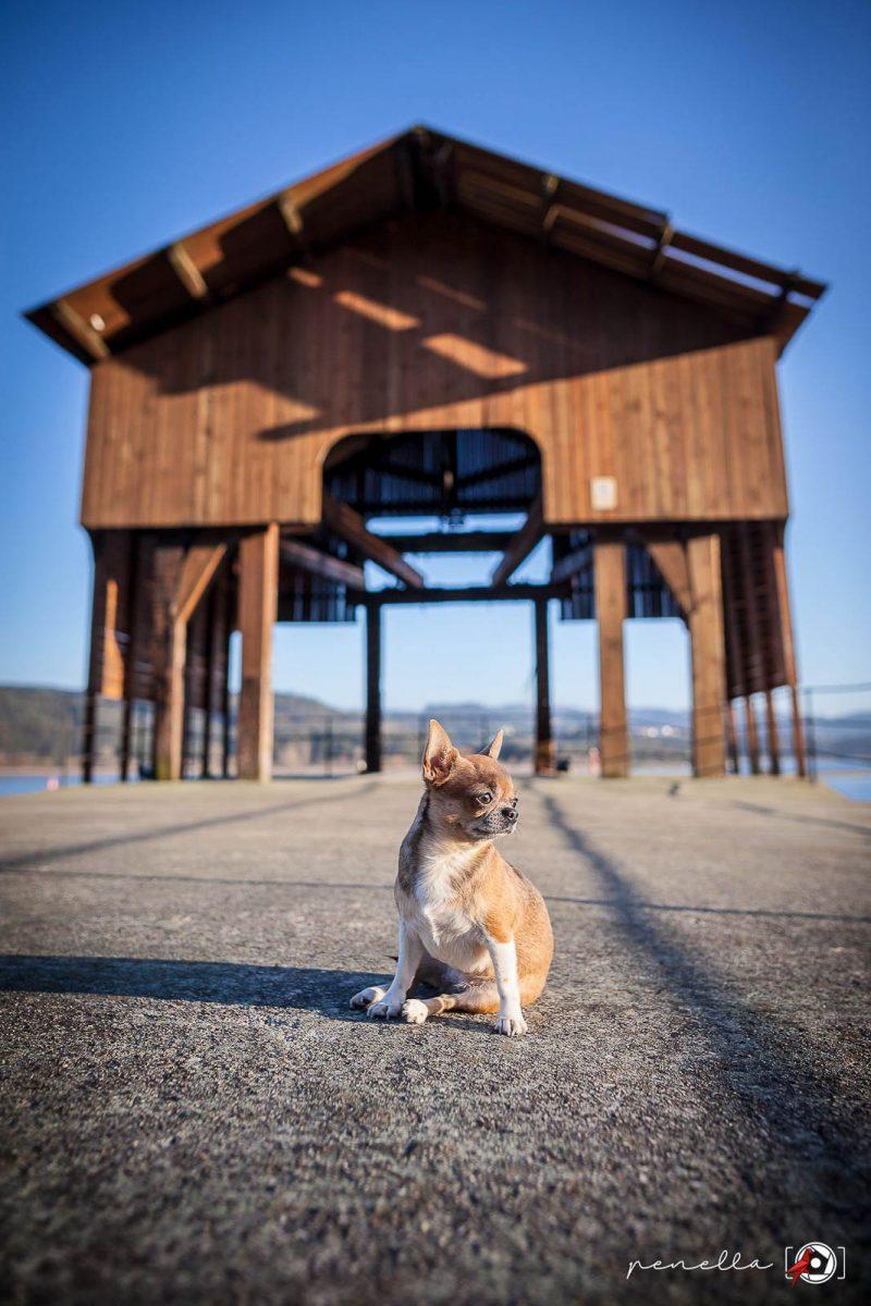 Fotógrafo de mascotas en Soto del Barco en Asturias PenellaFotografia.com