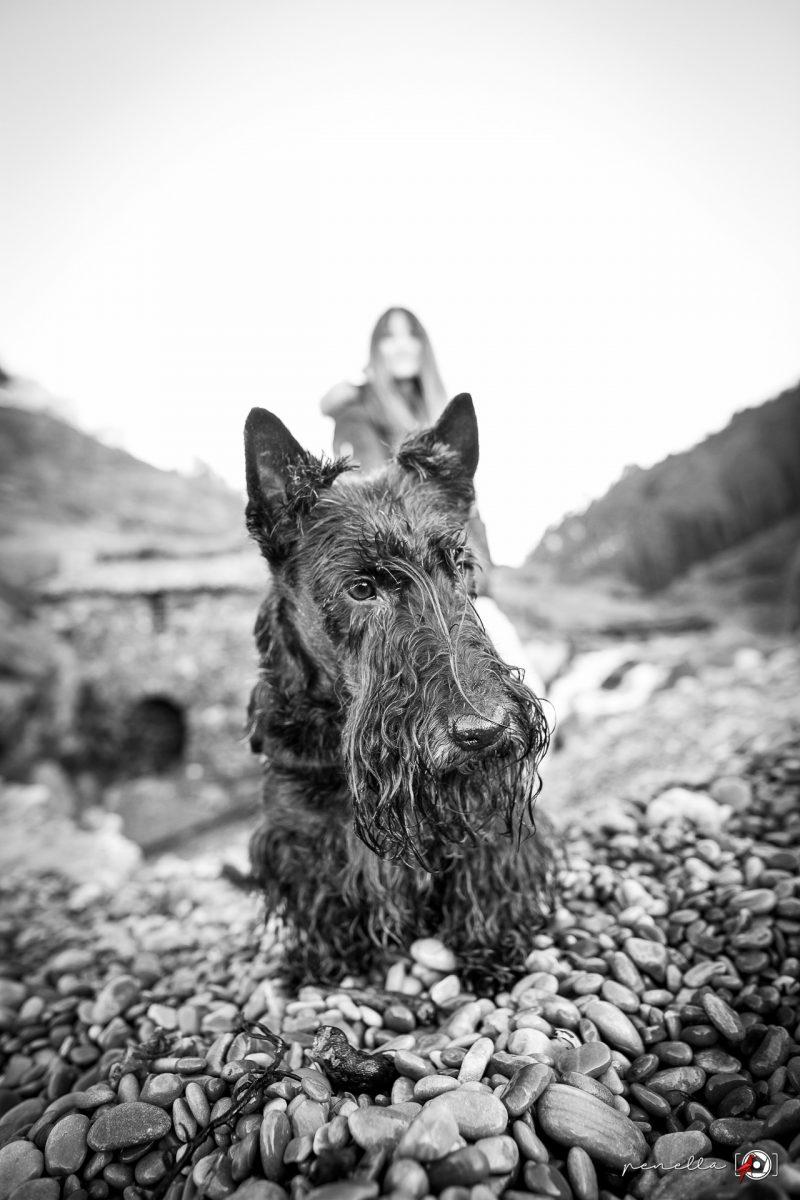 Foto en blanco y negro de mascotas perros en Asturias, Avilés, Gijón y Oviedo de Penella Fotografía