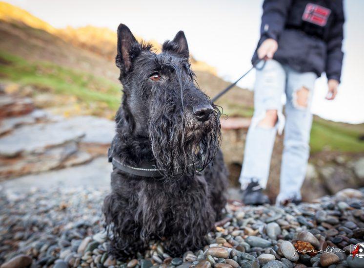 Foto de mascotas y perros en Asturias, Avilés, Gijón y Oviedo de Penella Fotografía