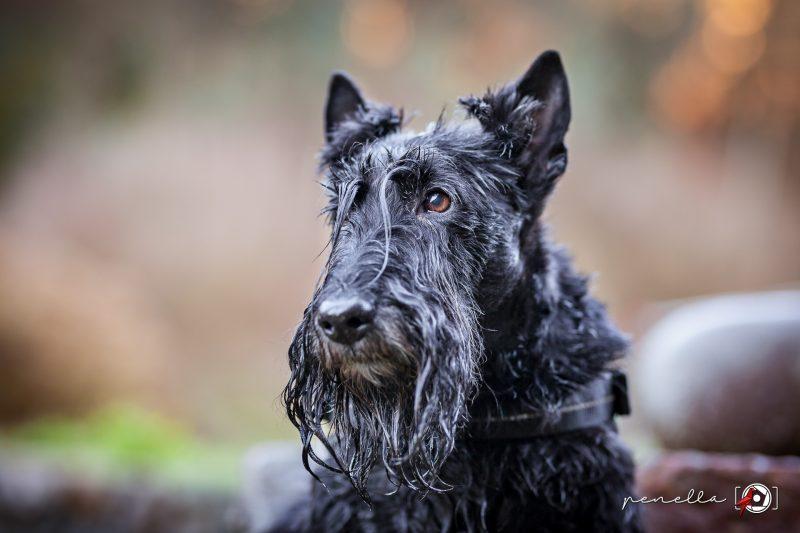 Foto de mascotas, perros y gatos en Asturias de la fotógrafa Penella Fotografía