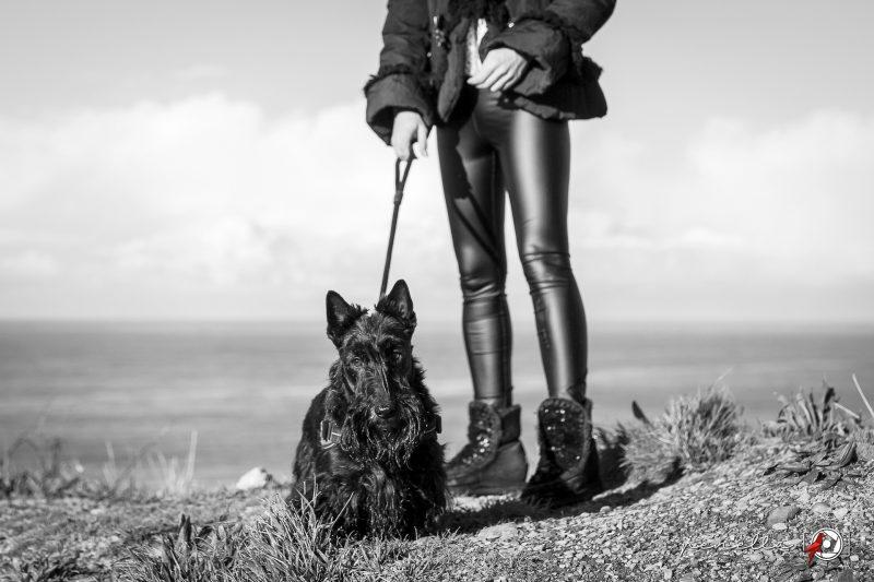Fotografía en blanco y negro de mascotas, perros y gatos en Asturias de Penella Fotografía