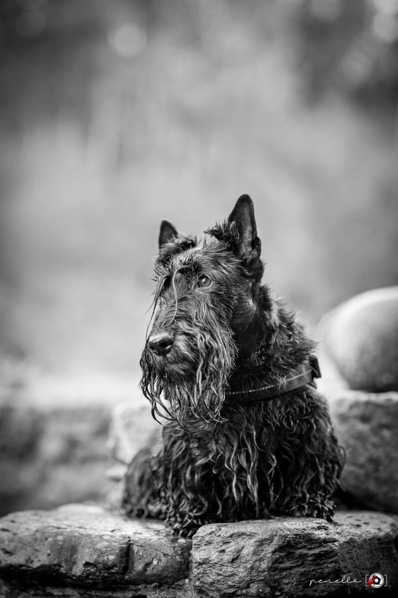Penella Fotografía, Fotógrafo de mascotas en blanco y negro en Asturias, Gijón, Oviedo y Avilés