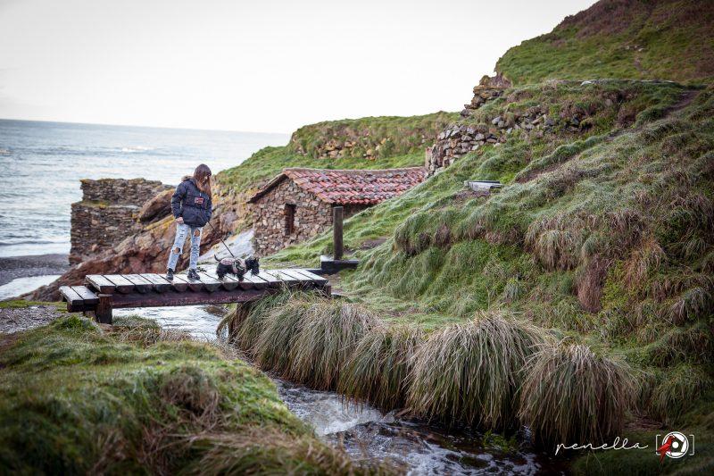 Reportaje de mascotas en Asturias, Gijón, Avilés y Oviedo de Penella Fotografía