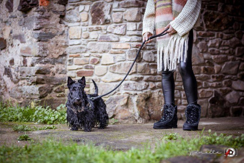 Sesión de foto de mascota perro o gato en Asturias de la fotógrafa Penella Fotografía