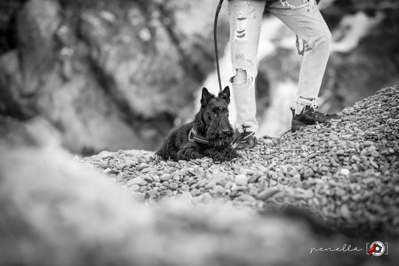 Sesión de fotos en blanco y negro de mascotas, perros y gatos de la fotógrafa Penella Fotografía