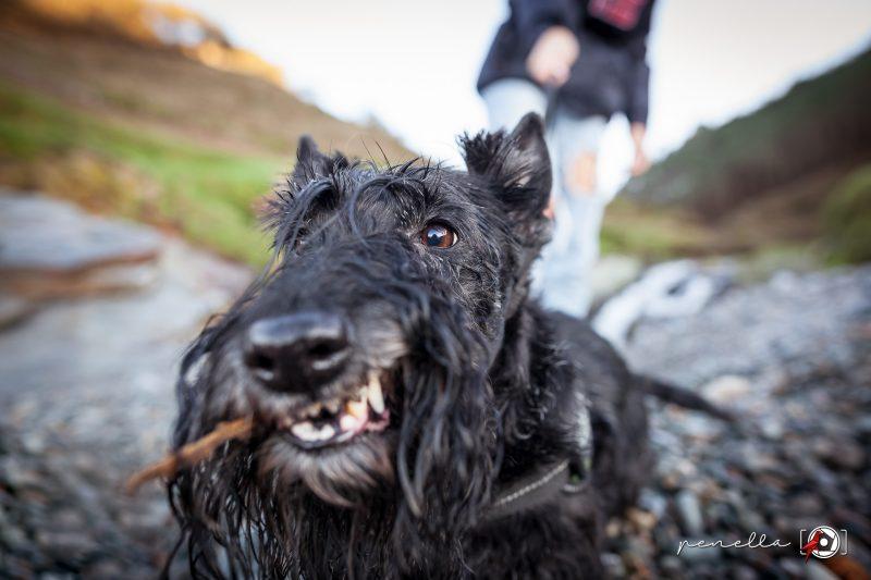 Sesión de fotos a mascota, perros y gatos en Asturias de Penella Fotografía